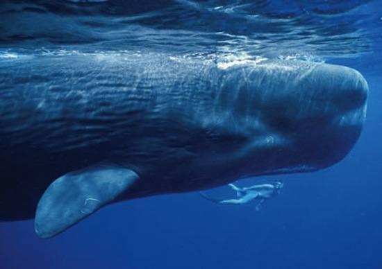 Musique relaxante : le chant des baleines
